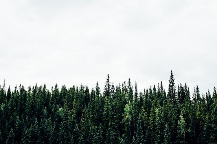 skogsavverkning